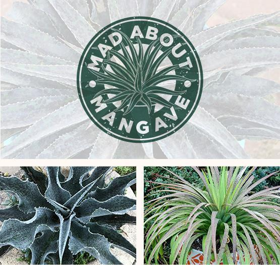 Mad About Mangrove