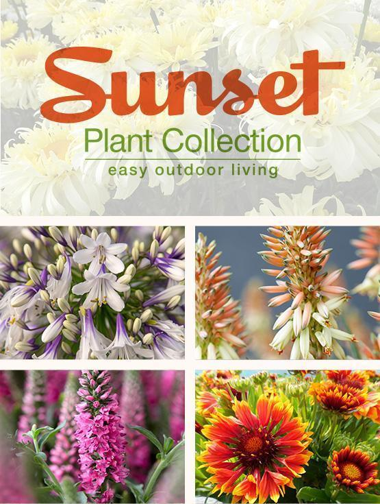 Sunset Plant Collection